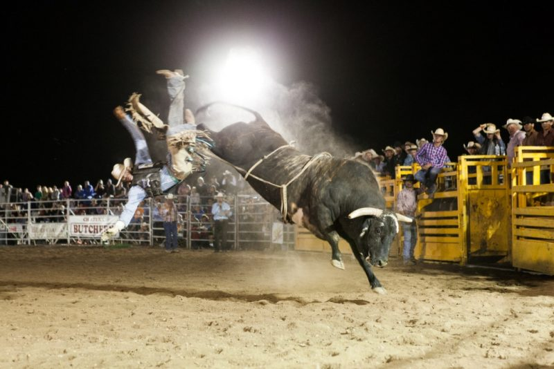 Chiltern Rodeo cowboy being thrown off bull pro rodeo mid air